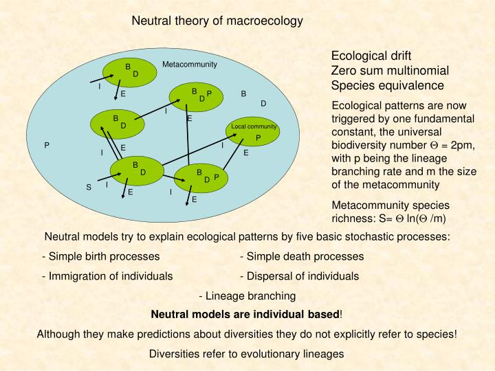 Neutral theory of macroecology
