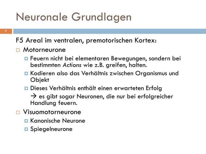 Neuronale Grundlagen