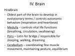 iv brain4