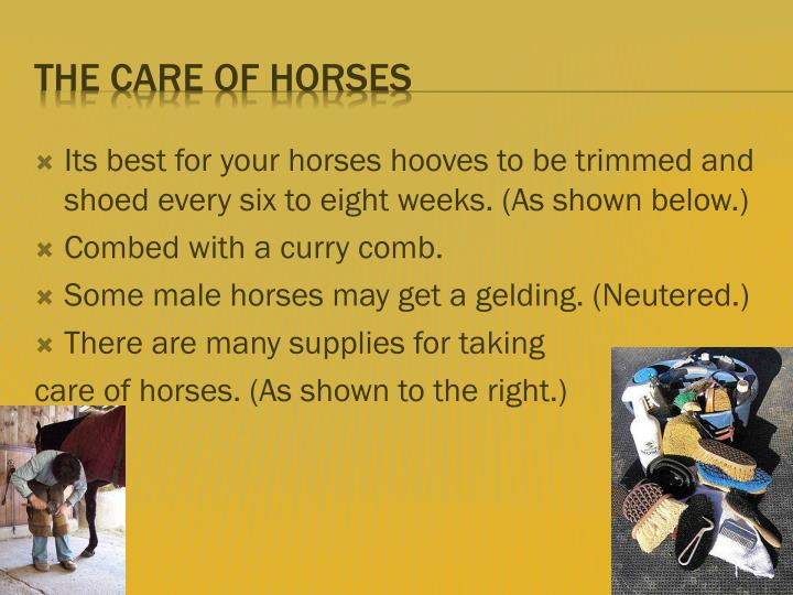 Its best for your horses hooves to be trimmed and shoed every six to eight weeks. (As shown below.)