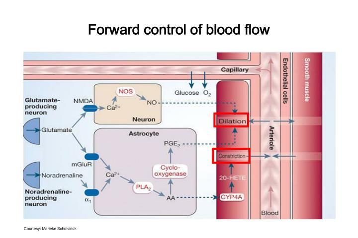 Forward control of blood flow