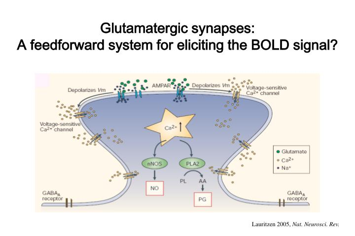 Glutamatergic synapses: