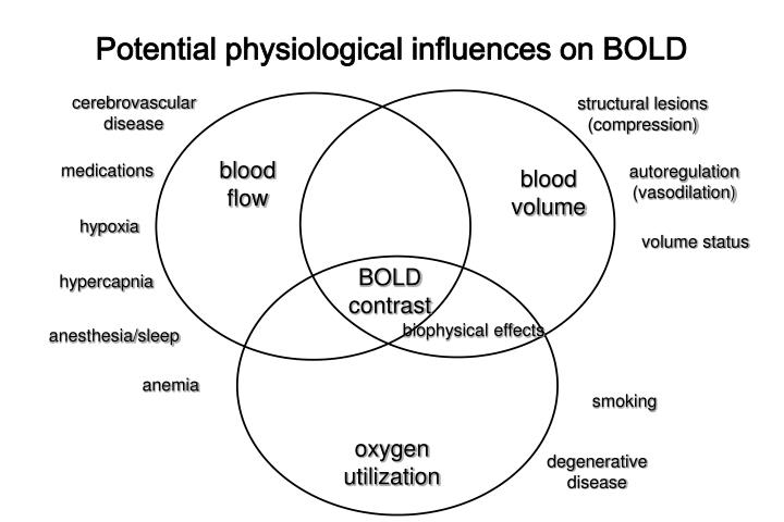 Potential physiological influences on BOLD