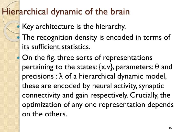 Hierarchical dynamic of the brain