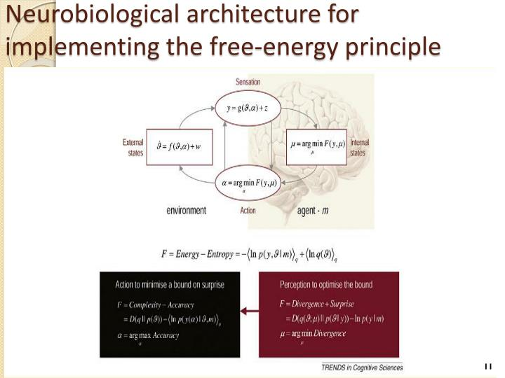 Neurobiological architecture for