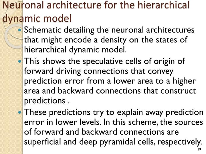 Neuronal architecture for the hierarchical dynamic model