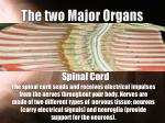 the two major organs1