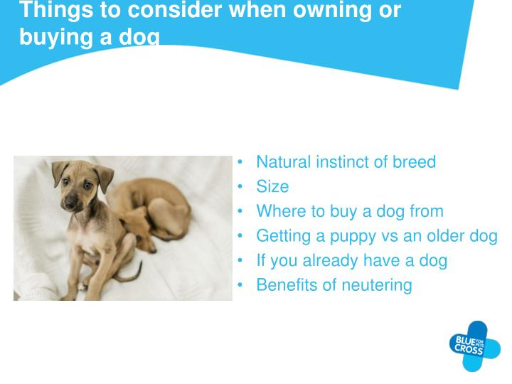 Things to consider when owning or buying a dog