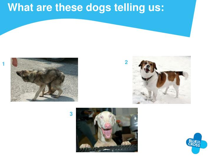 What are these dogs telling us: