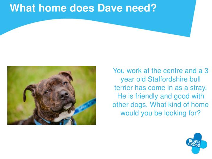 What home does Dave need?