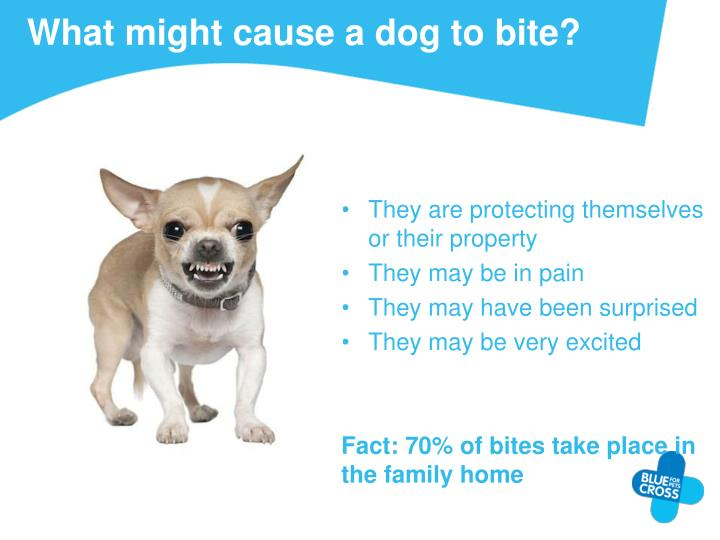 What might cause a dog to bite?