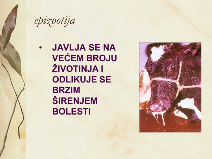 epizootija