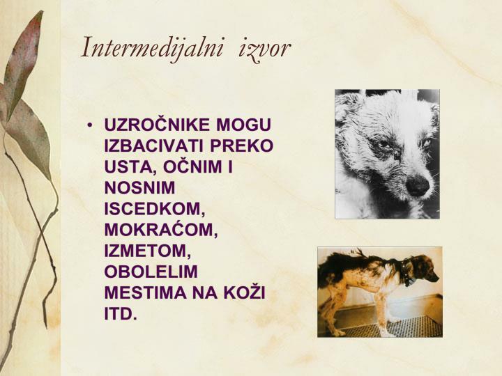 Intermedijalni