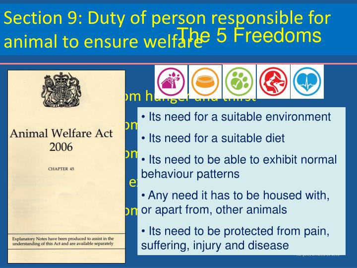 Section 9: Duty of person responsible for animal to ensure welfare