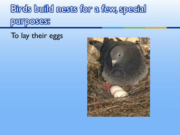 Birds build nests for a