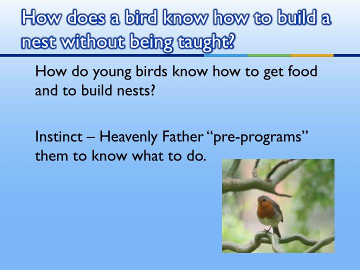 How does a bird know how to build a nest without being taught?