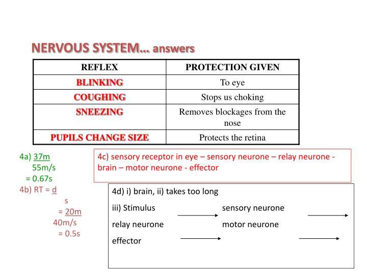NERVOUS SYSTEM…