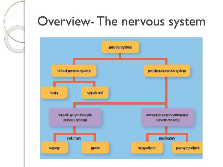Overview- The nervous system