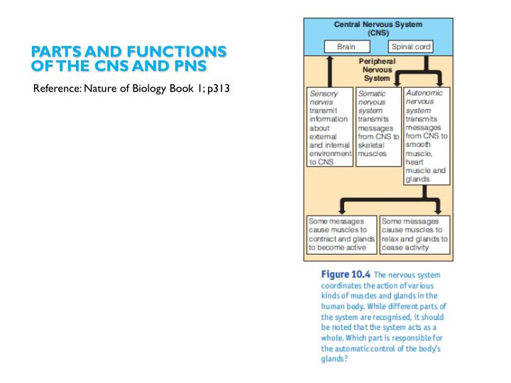 Parts and functions
