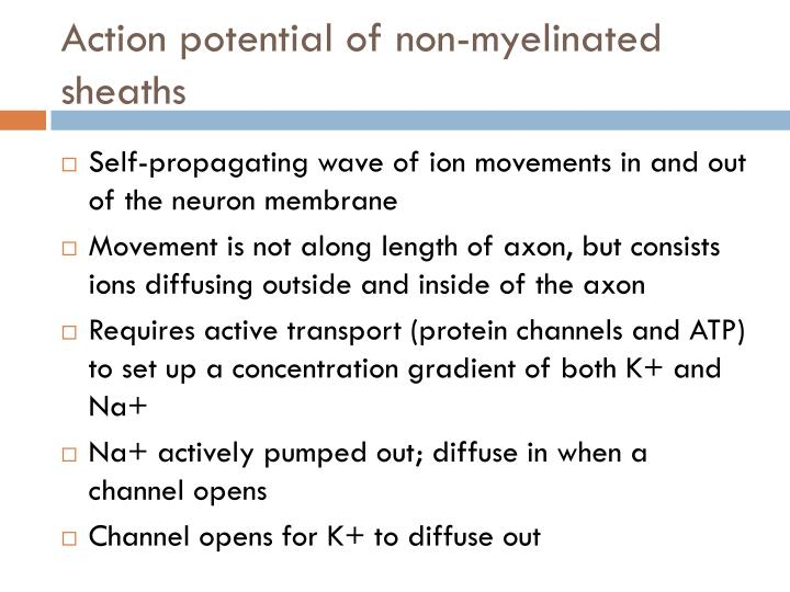 Action potential of non-myelinated sheaths