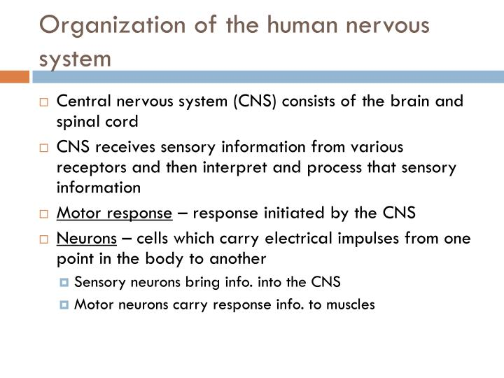Organization of the human nervous system