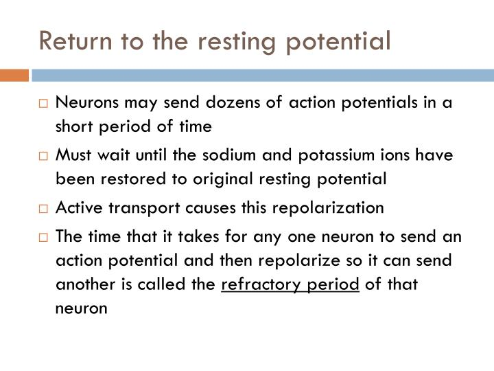 Return to the resting potential