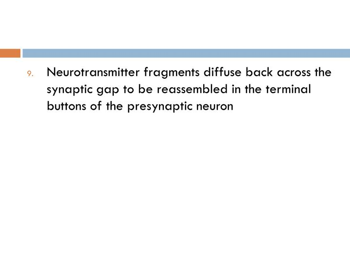 Neurotransmitter fragments diffuse back across the synaptic gap to be reassembled in the terminal buttons of the presynaptic neuron