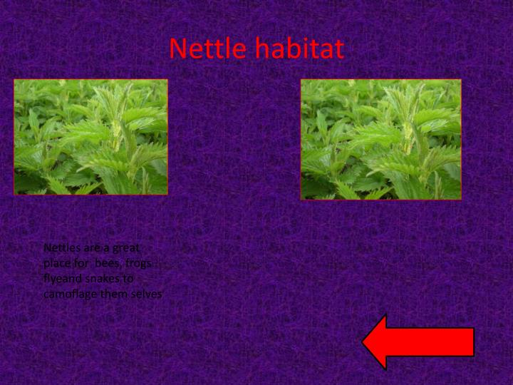 Nettle habitat