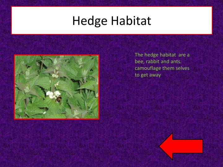 Hedge Habitat