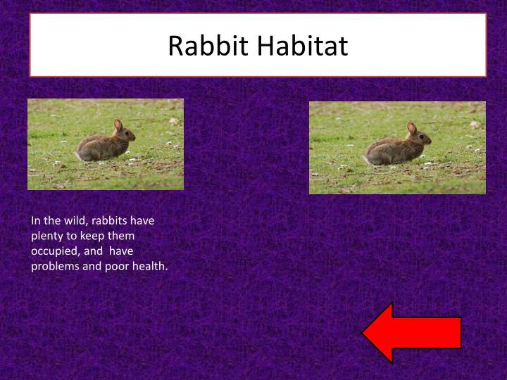 Rabbit Habitat