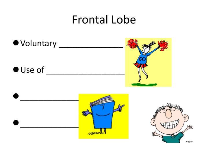Frontal Lobe