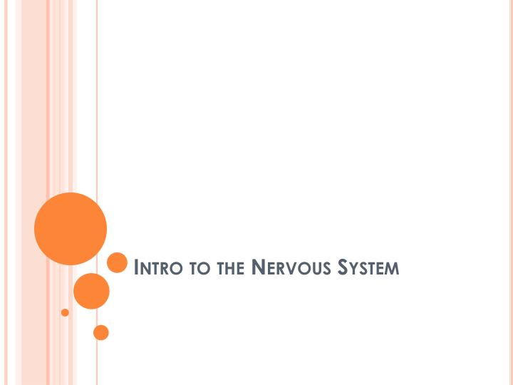 Intro to the nervous system