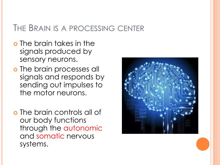 The Brain is a processing center