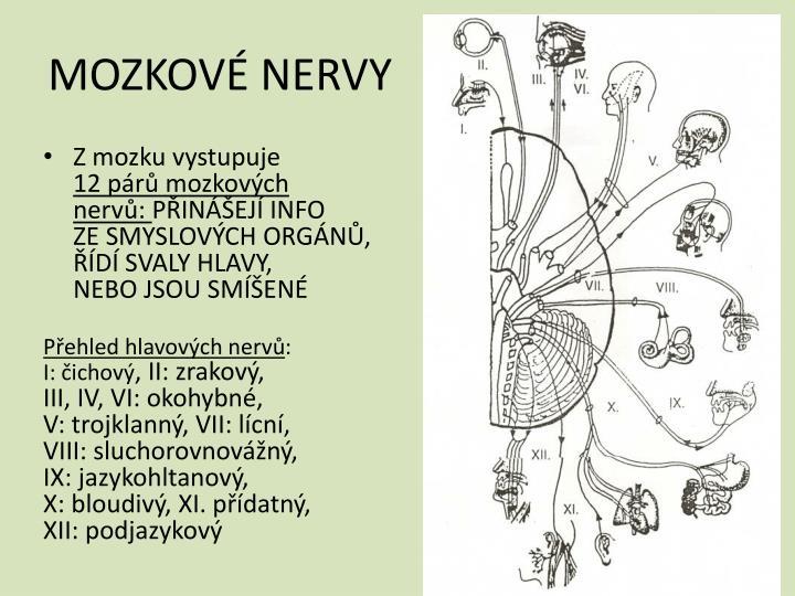 MOZKOVÉ NERVY