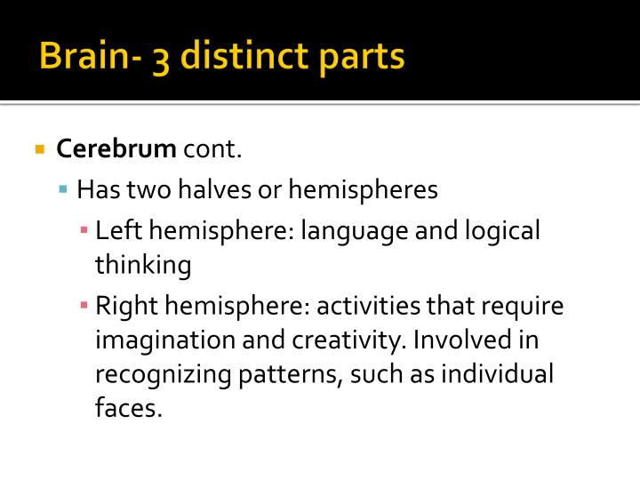 Brain- 3 distinct parts