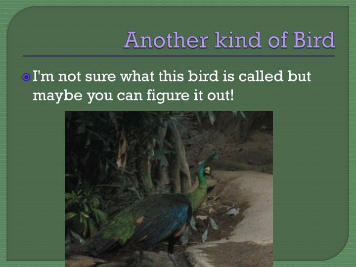 Another kind of Bird