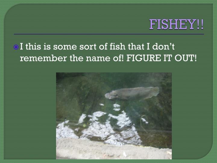 FISHEY!!