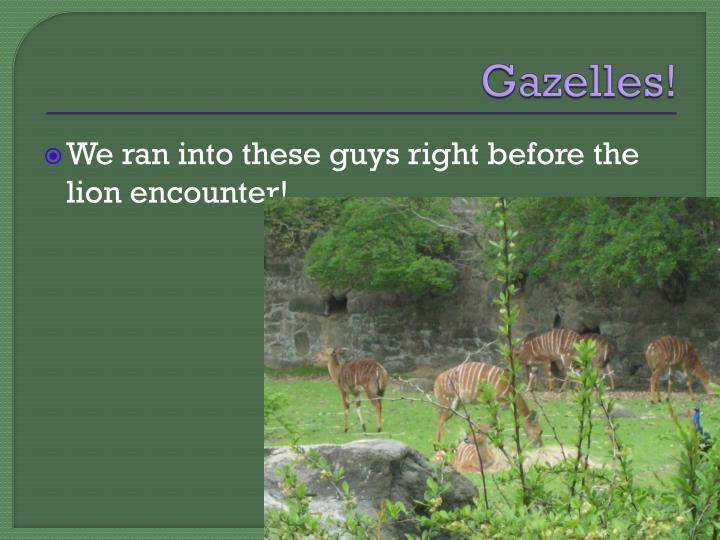 Gazelles!