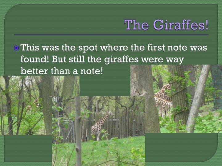 The Giraffes!
