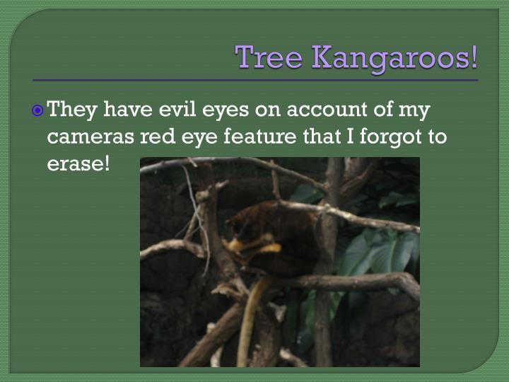 Tree Kangaroos!
