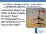 dlaczego ptakom siedz cym na liniach energetycznych nic si nie dzieje