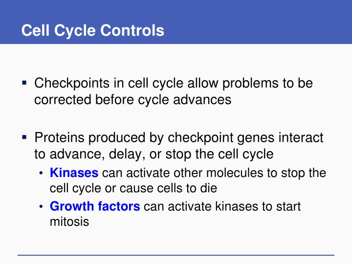 Cell Cycle Controls