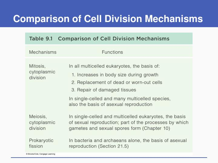 Comparison of Cell Division Mechanisms