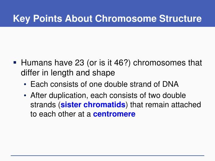 Key Points About Chromosome Structure