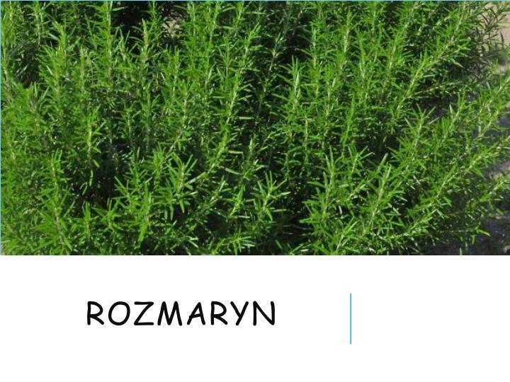 rozmaryn