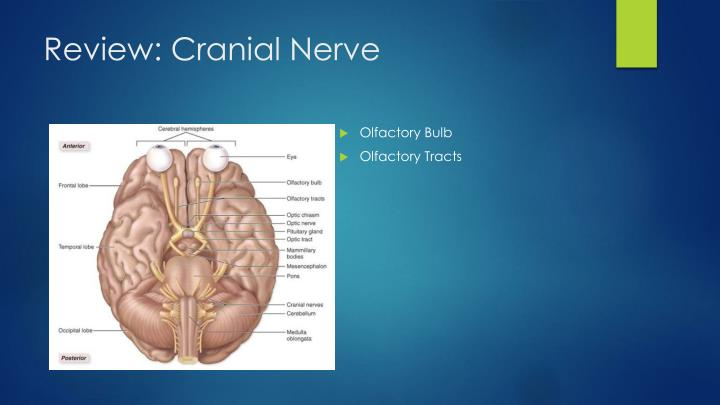 Review cranial nerve