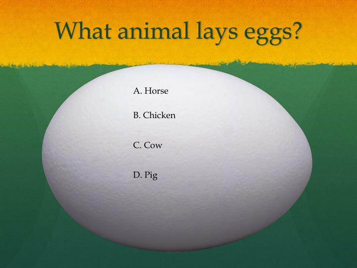 What animal lays eggs?