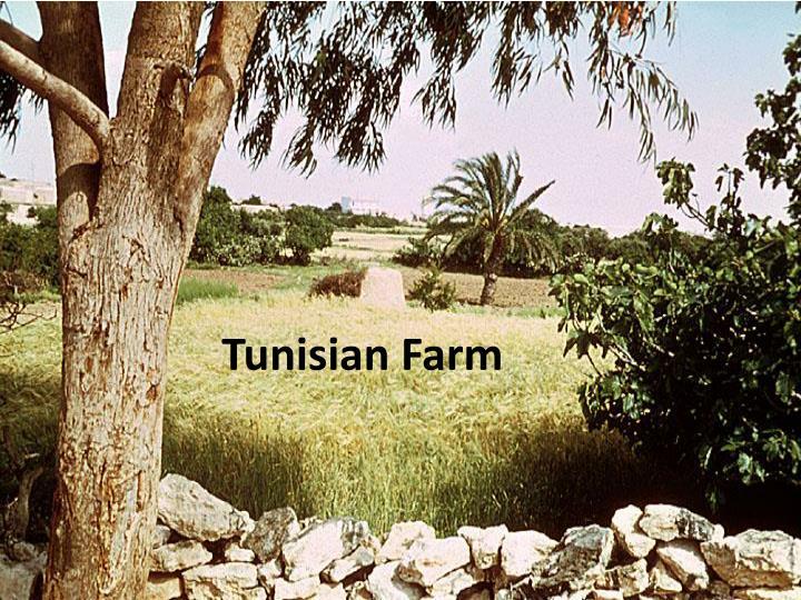Tunisian Farm