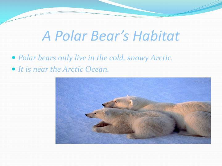 A Polar Bear's Habitat