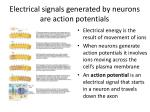 electrical signals generated by neurons are action potentials